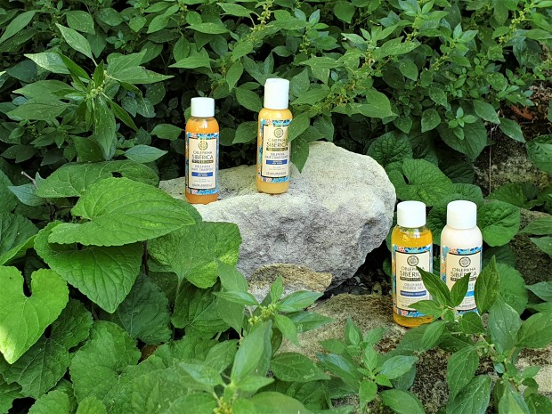 Travel size toiletries on a rock surrounded by plants
